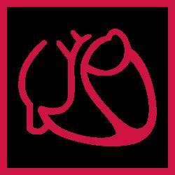 Logo DGK Logo Deutsche Gesellschaft für Kardiologie – Herz- und Kreislaufforschung e.V.